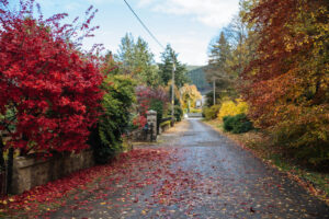 The Autumn colour are beautiful in our acommodation, Ballater